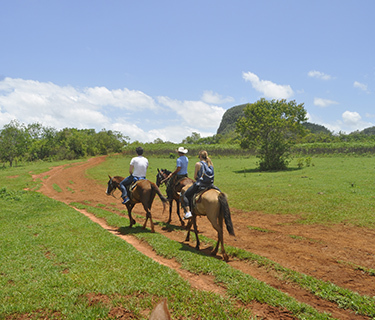 Horseback riding through the Valle of Palmarito